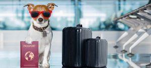 pet handling and transportation using Power BI customized dashboards